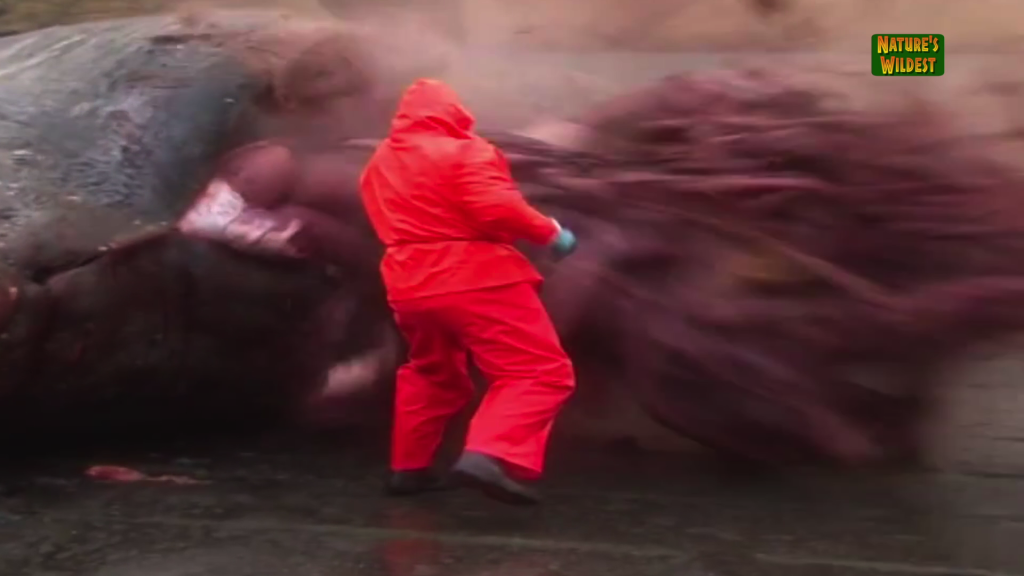 Sperm whale explodes in taiwan